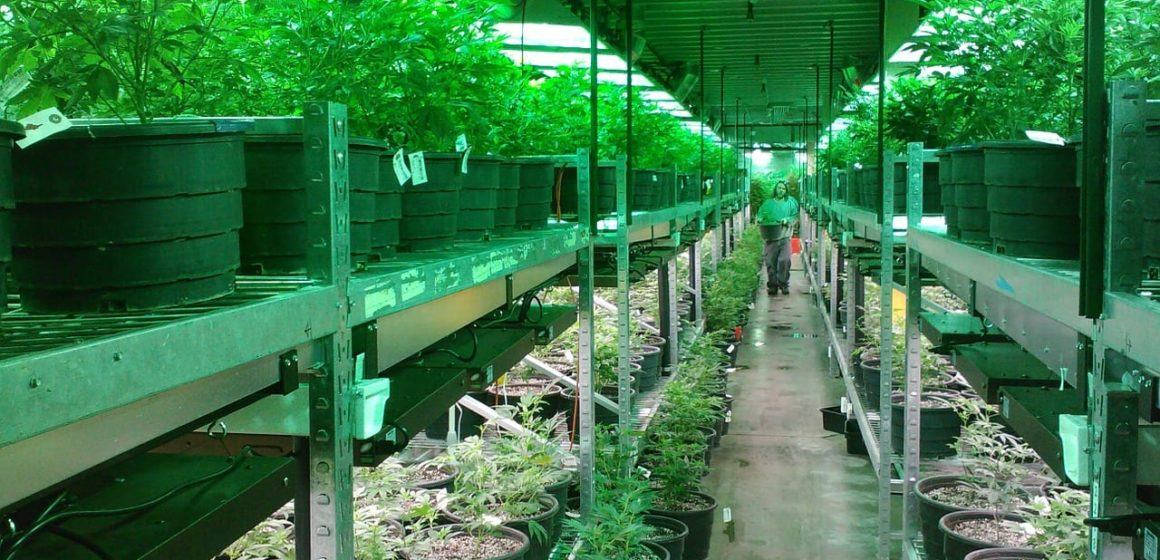 Industrial hemp farms get approval in Santa Clara County