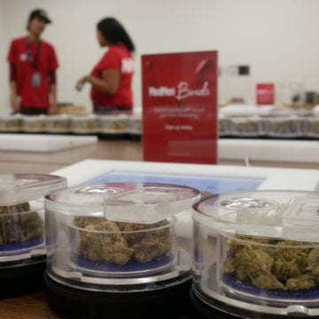 Los defensores luchan contra las nuevas reglas de cannabis del condado de Santa Clara