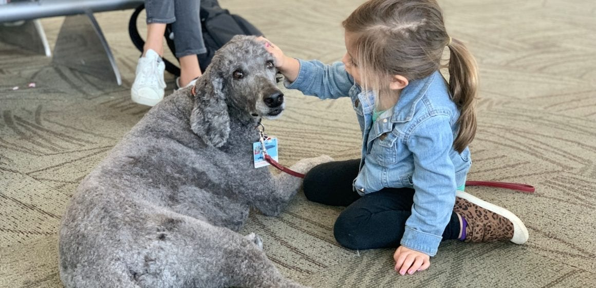 San Jose airport therapy animal program continues to spread 'pawsitivity'