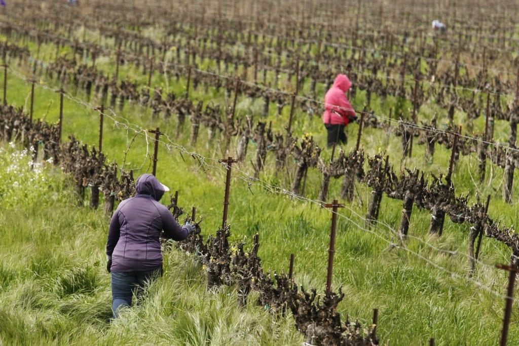 Farmworkers working in the fields