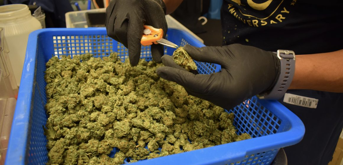 Will cannabis come to retail centers in San Jose after another delay?