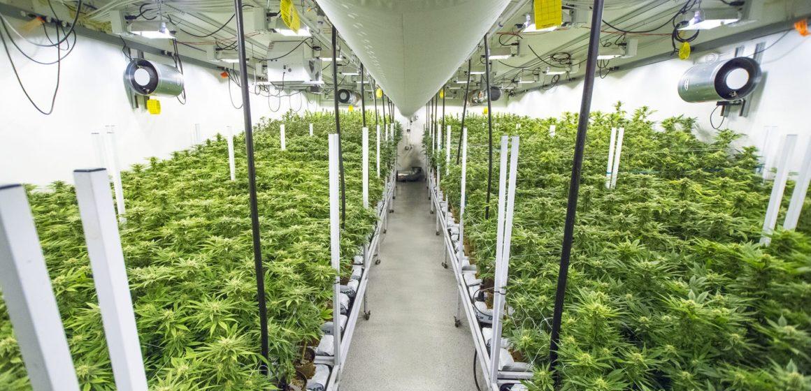 En medio de COVID-19, la compañía de cannabis de San José amplía las entregas con Teslas
