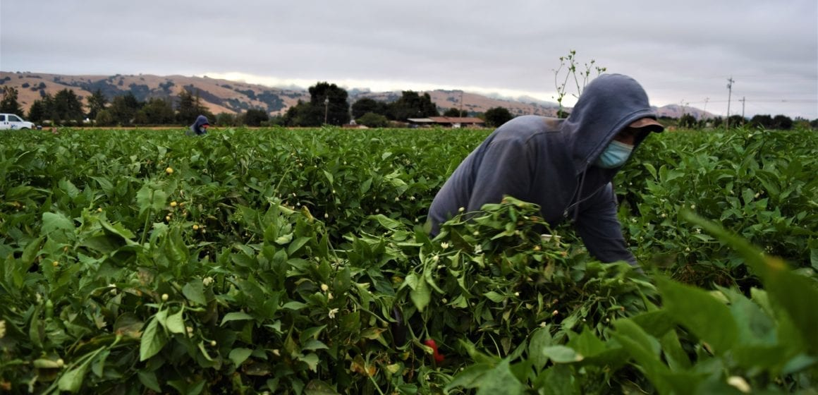 Farmworker bills aim to protect against COVID-19 but may not go far enough