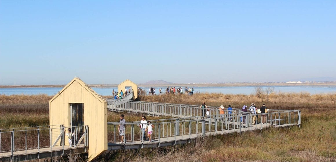 Cortese: Day on the Bay goes virtual with boat tour of  wetlands