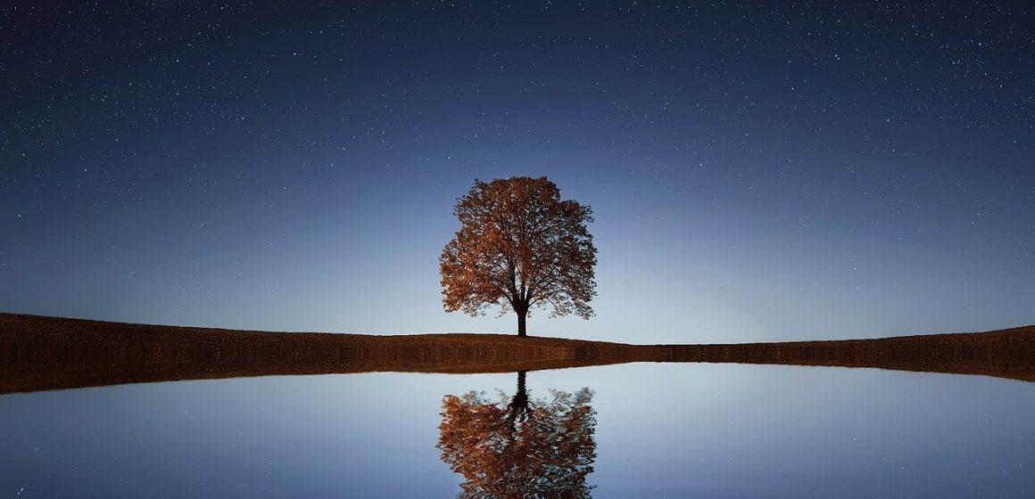 Staedler: Climate Smart San Jose bỏ lỡ dấu ấn về giá trị của cây cối