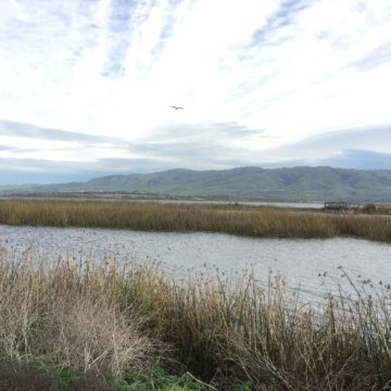 Representantes de Silicon Valley proyecto de ley de restauración de back bay