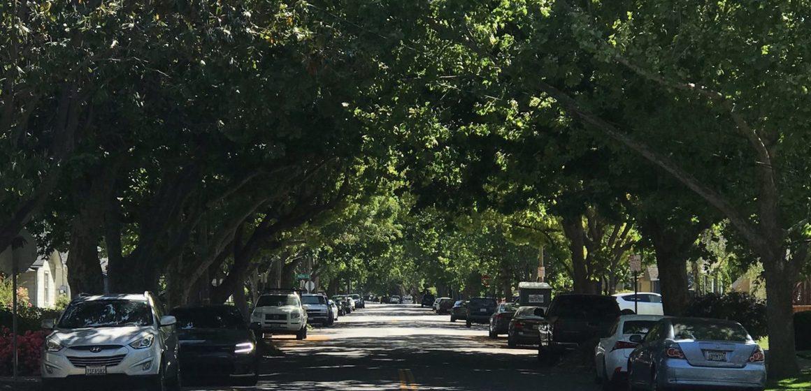 San Jose's urban forest plan baffles, angers stakeholders