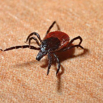 Lari: enfermedad de Lyme: la otra pandemia